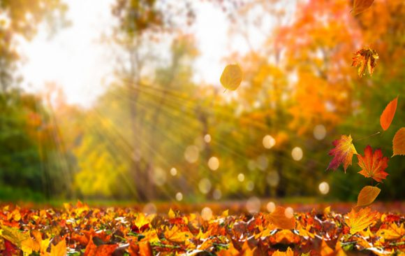 Fall In Simcoe County! Do You Have a Favourite Hiking Spot?