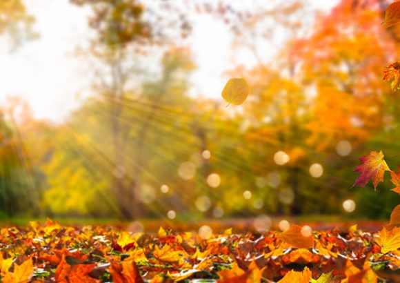 Fall in Simcoe County – Things to Do!